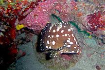 Starfish Scuba, Boynton Beach, United States
