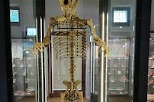 Museo Geopaleontologico di Camposilvano, Verona, Italy