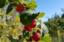Patty's Berries & Bunches, Mattituck, United States