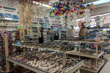 Big Shark Gift Shop, Daytona Beach, United States