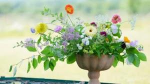 Jardinería Arte Sano