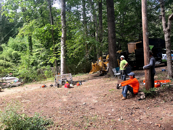 Lake Ridge tree removal service by American Tree & Landscaping LLC