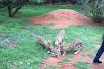 De Wildt Shingwedzi Cheetah Ranch, Bela Bela, South Africa