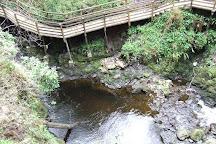 Glenariff Forest Park, County Antrim, United Kingdom