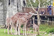 Rotterdam Zoo, Rotterdam, The Netherlands