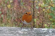 Coed y Brenin Forest Park, Ganllwyd, United Kingdom