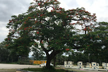 Lam Tsuen Wishing Tree, Hong Kong, China