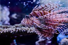 Ripley's Aquarium of the Smokies, Gatlinburg, United States