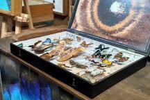 Arthropoda - Butterfly Museum, Bochnia, Poland