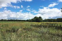 Chippewa Nature Center, Midland, United States
