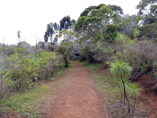 Iliau Nature Loop & Kukui Trail