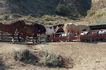 Medora Riding Stables, Medora, United States