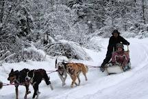 Revelstoke Dogsled Adventures, Revelstoke, Canada