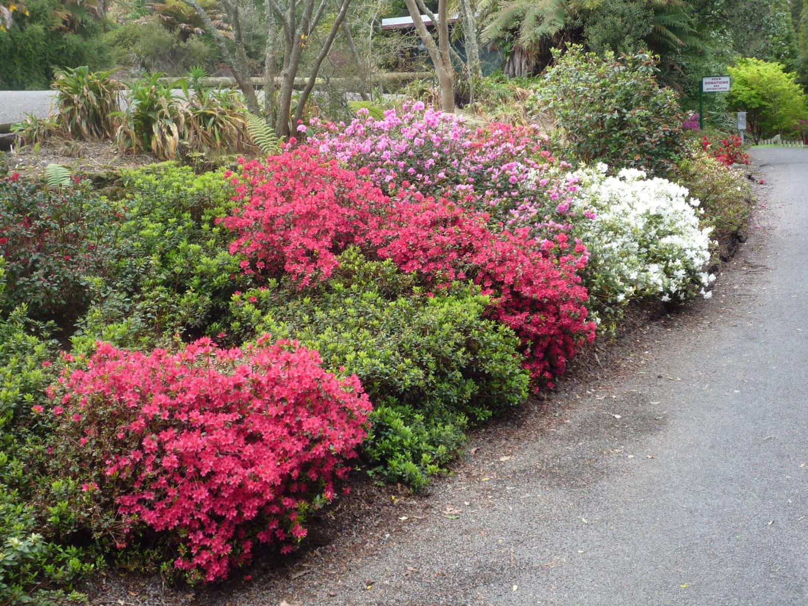 Visit Waipahihi Botanical Gardens On Your Trip To Taupo Or