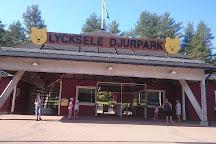 Visit Lycksele Djurpark On Your Trip To Lycksele Or Sweden Inspirock