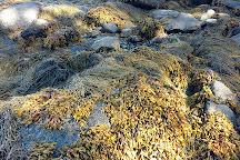 Birch Point Beach State Park, Owls Head, United States