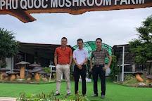 Phu Quoc Mushroom, Duong To, Vietnam