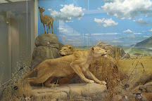 Museo di Storia Naturale Faraggiana Ferrandi, Novara, Italy