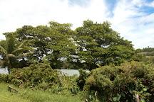 Lake Apo, Valencia City, Philippines