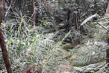 Mount Bartle Frere, Atherton, Australia