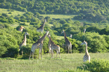 Shamwari Game Reserve, Port Elizabeth, South Africa