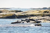 Kastor Boat Trips, Hono, Sweden