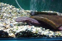 Nihon Salamander Center, Nabari, Japan