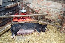 Baylham House Rare Breeds Farm, Ipswich, United Kingdom