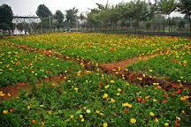 Sunflower Garden, Guangzhou, China