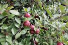 Barber Orchard Fruitstand