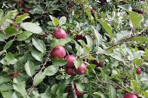 Barber Orchard Fruitstand, Waynesville, United States