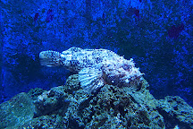 Piran Aquarium, Piran, Slovenia