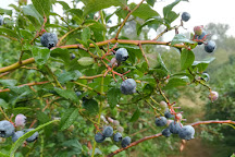 Bybee Blueberry Farm, North Bend, United States