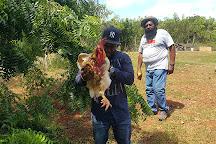 Eleuthera Hill-Top Farms, Eleuthera, Bahamas