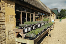 Cotswold Lavender, Broadway, United Kingdom