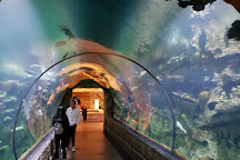 Shark Reef Aquarium at Mandalay Bay, Las Vegas, United States