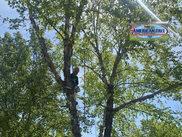 Tree Removal Service in Woodbridge VA by American Tree & Landscaping LLC
