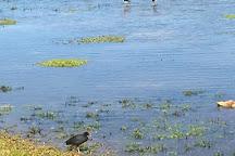 Kawai'ele Waterbird Sanctuary, Kekaha, United States