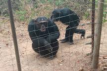 Chimfunshi Wildlife Orphanage, Chingola, Zambia