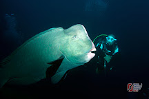 Zero Gravity Diving, Sanur, Indonesia