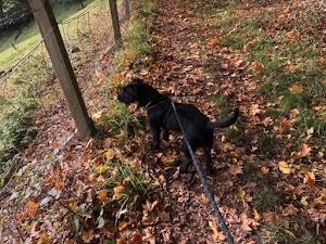 Potters Paws - Dog Walking & Sitting