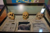 Museo di Archeologia e Paleontologia