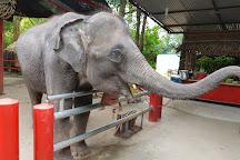 Kinnaree Elephant Trekking Tours, Rawai, Thailand