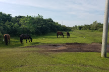 Wild Horse Adventure Tours, Corolla, United States