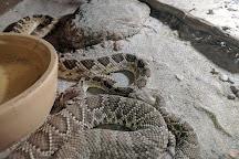 Forever Wild Exotic Animal Sanctuary, Phelan, United States