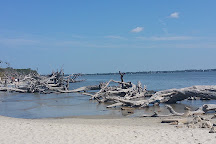 Driftwood Beach, Jekyll Island, United States