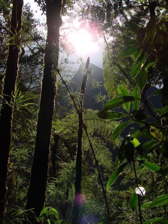 Parc national Cotapata