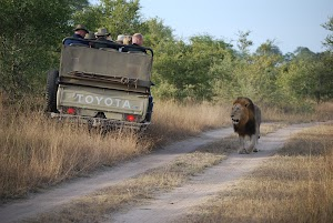 Wild at Heart Tours and Safaris