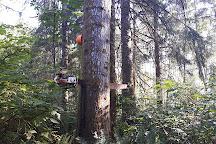 Wacky woods, Fanny Bay, Canada