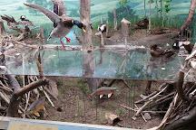 Blain County Wildlife Museum, Chinook, United States